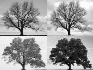 """Four Seasons - Longbridge Road"", Joiseyshowaa, Creative Commons License"